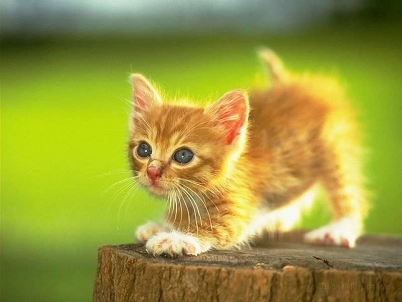 Tapety Kotki Koty Gry Dla Dzieci Wallpapers Catstapety Koty 120
