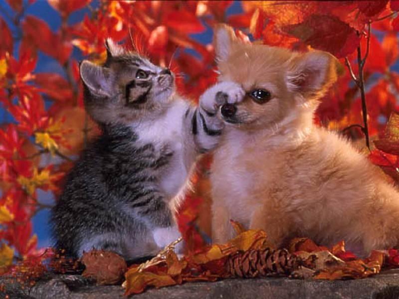 Tapety Kotki Koty Gry Dla Dzieci Wallpapers Catstapety Koty 75