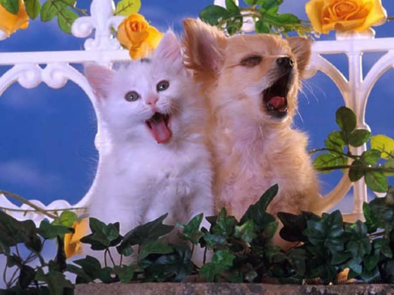 Tapety Kotki Koty Gry Dla Dzieci Wallpapers Catstapety Koty 76